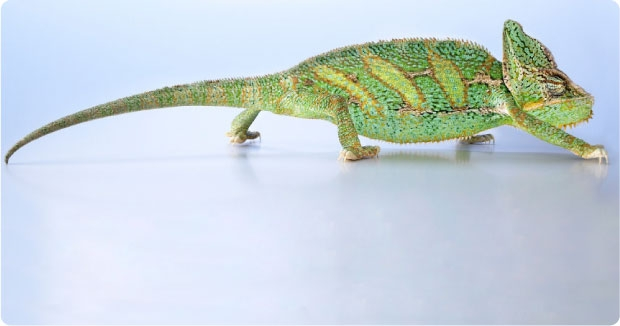 <h3>Winning business with rapport</h3><p>What is it about a chameleon that helps them to survive in the harshest of environments?